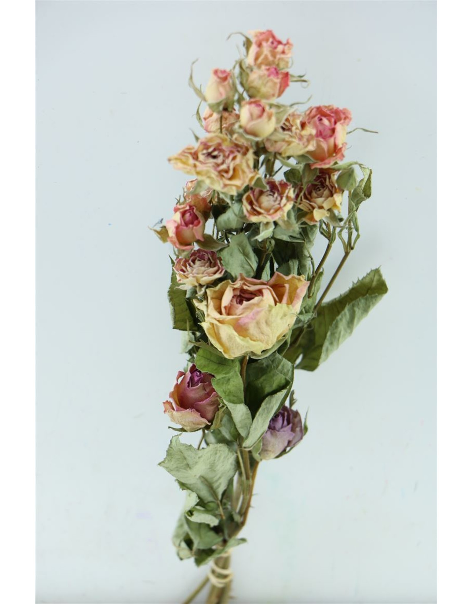 Dried Roses Bouquet Rainbow Pink Mix Bunch x 2