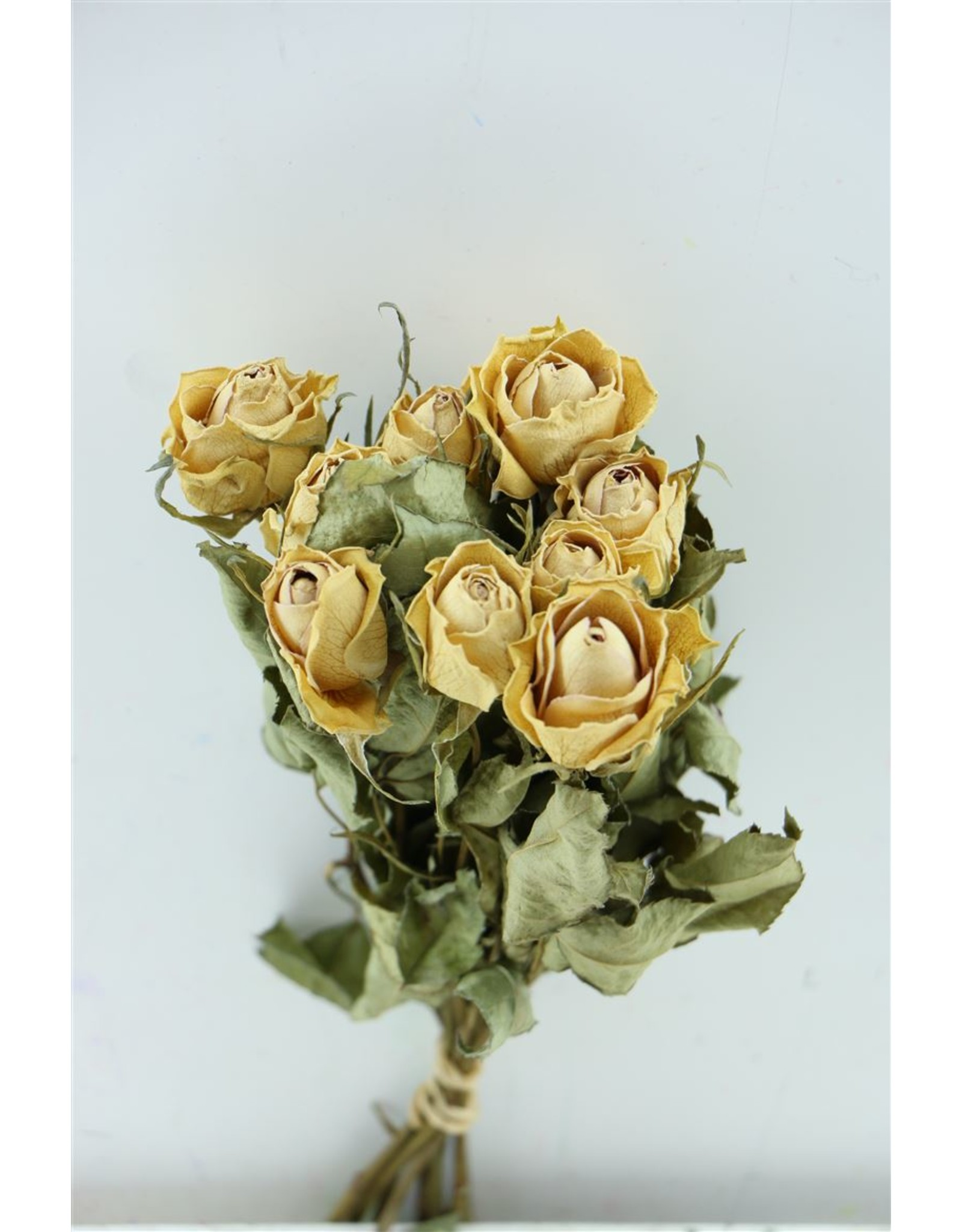 Dried Roses Pink 10pcs Scented Bunch x 8