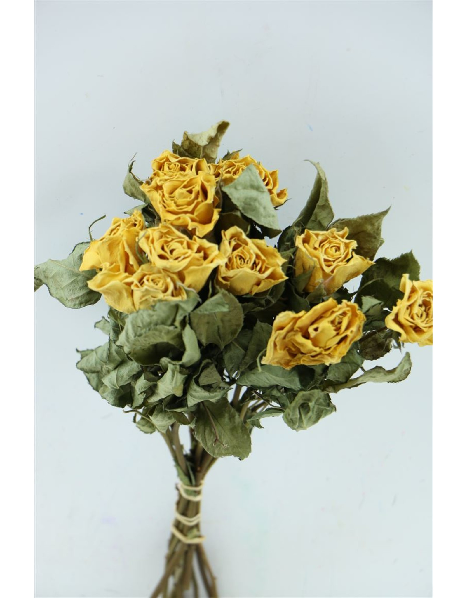 Dried Roses Yellow 10pcs Scented x 8