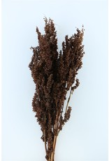 Dried Bunch Rumex Crisp 10pc L90.0 x 2