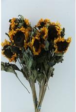Dried Sunflower Yellow Bunch x 3