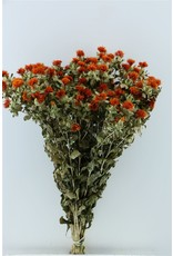 Dried Carthamus Orange Bunch x 5