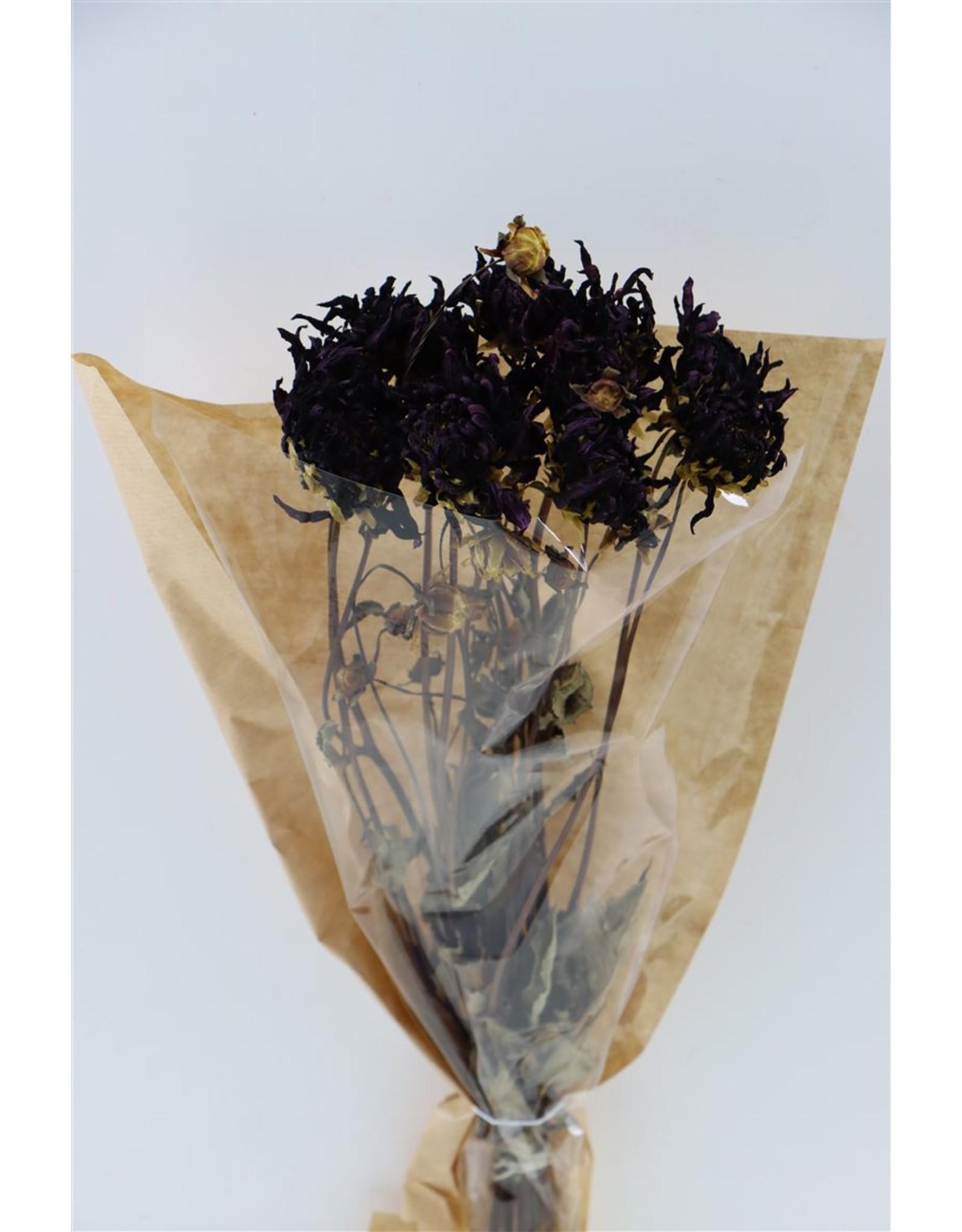 Dried Dahlia Dark Purple Bunch x 2