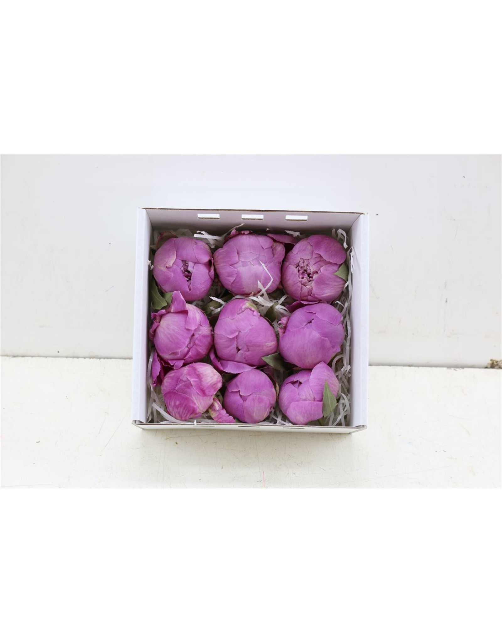 Dried Peony Freeze Purple 9pc Box x 9