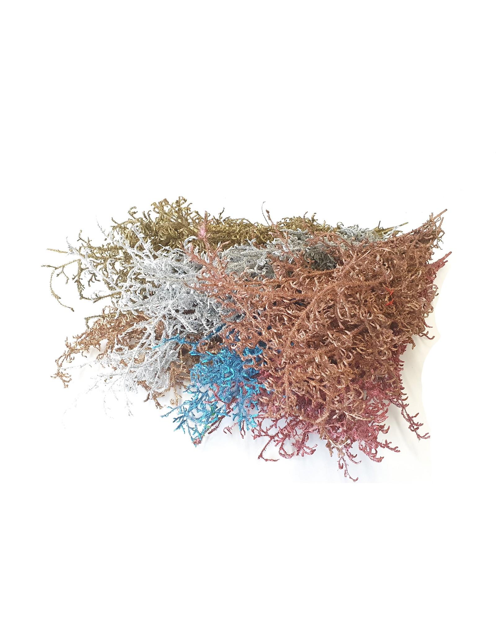 Licopodium 10 pc per bunch Mixed Colours x 5