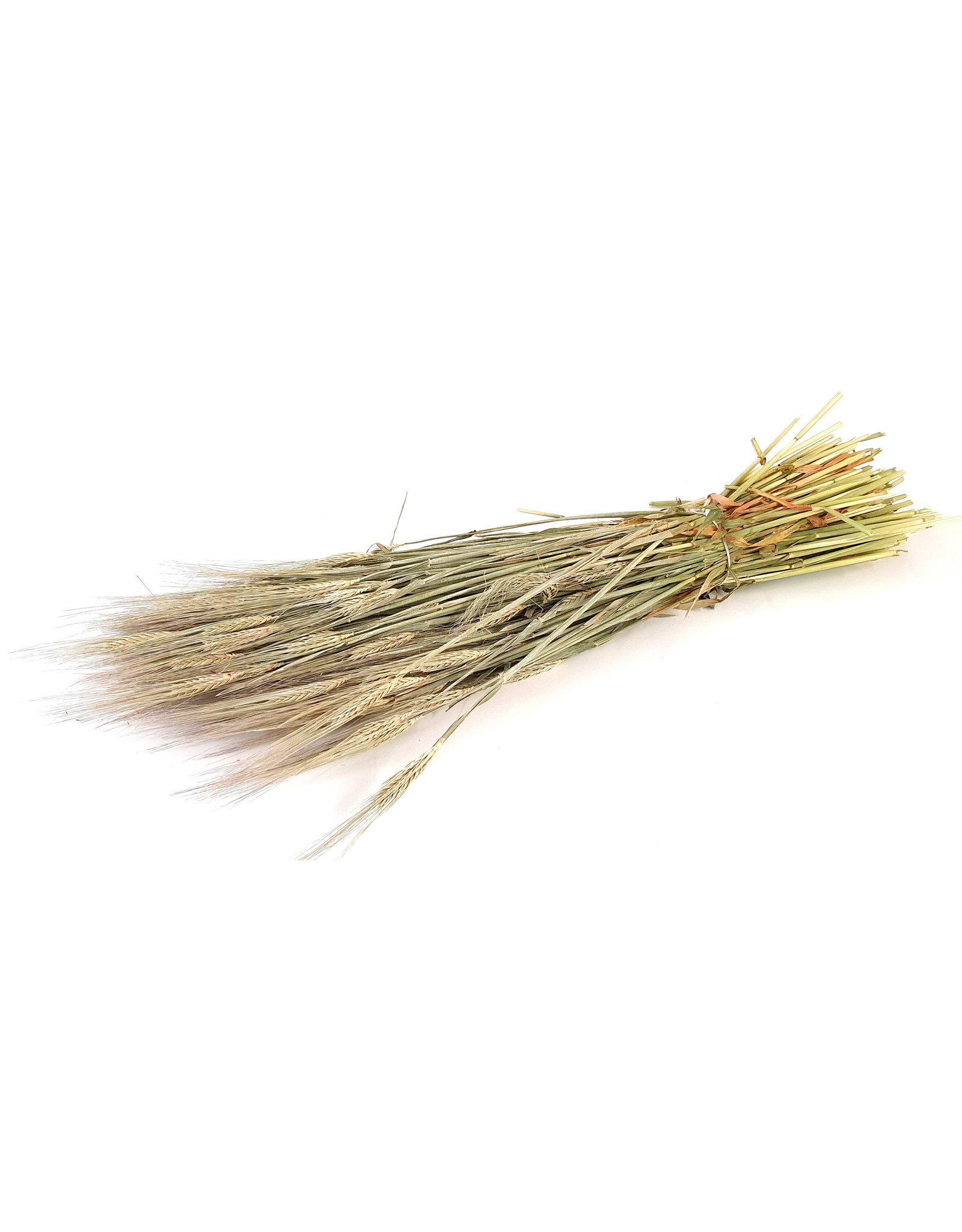 Hordeum per bunch Frosted White x 6