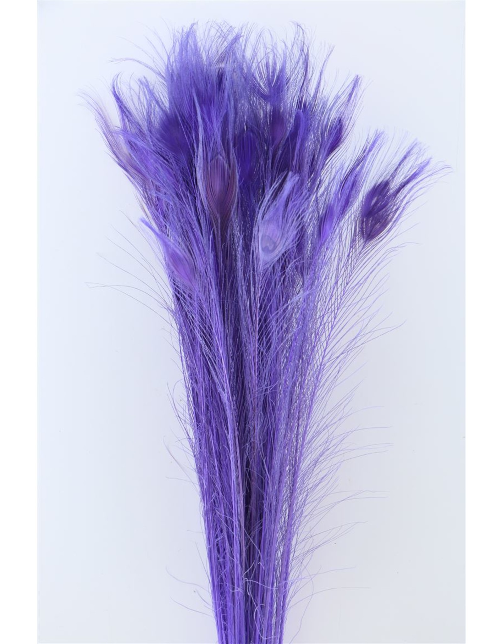 Dried Feather Peacock L90-100 Milka x 50