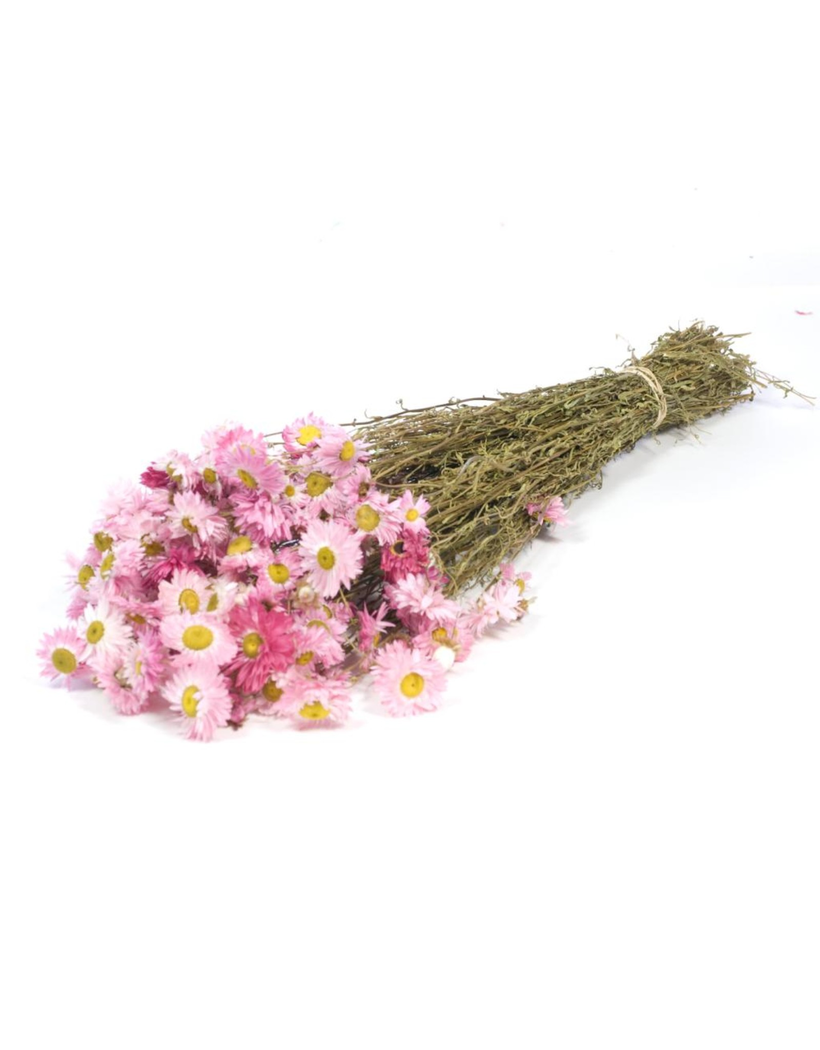 Acroclinium natural pink x 25
