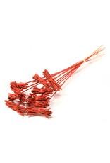 Cocochain posy 8cm posy o/s 10pc red spring x 18