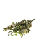 Fagus preserved 150gr green x 25