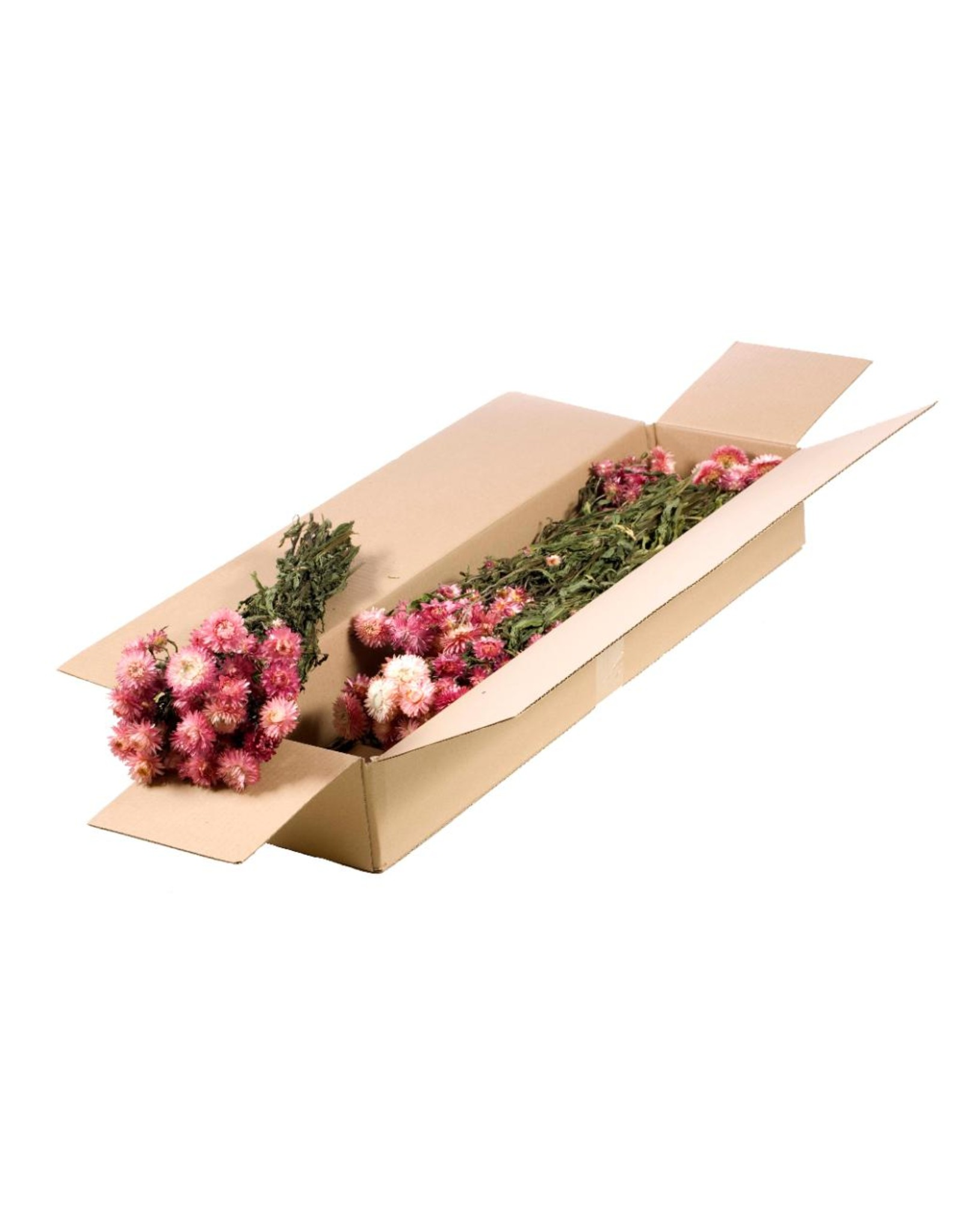 Helichrysum SB natural pink x 5