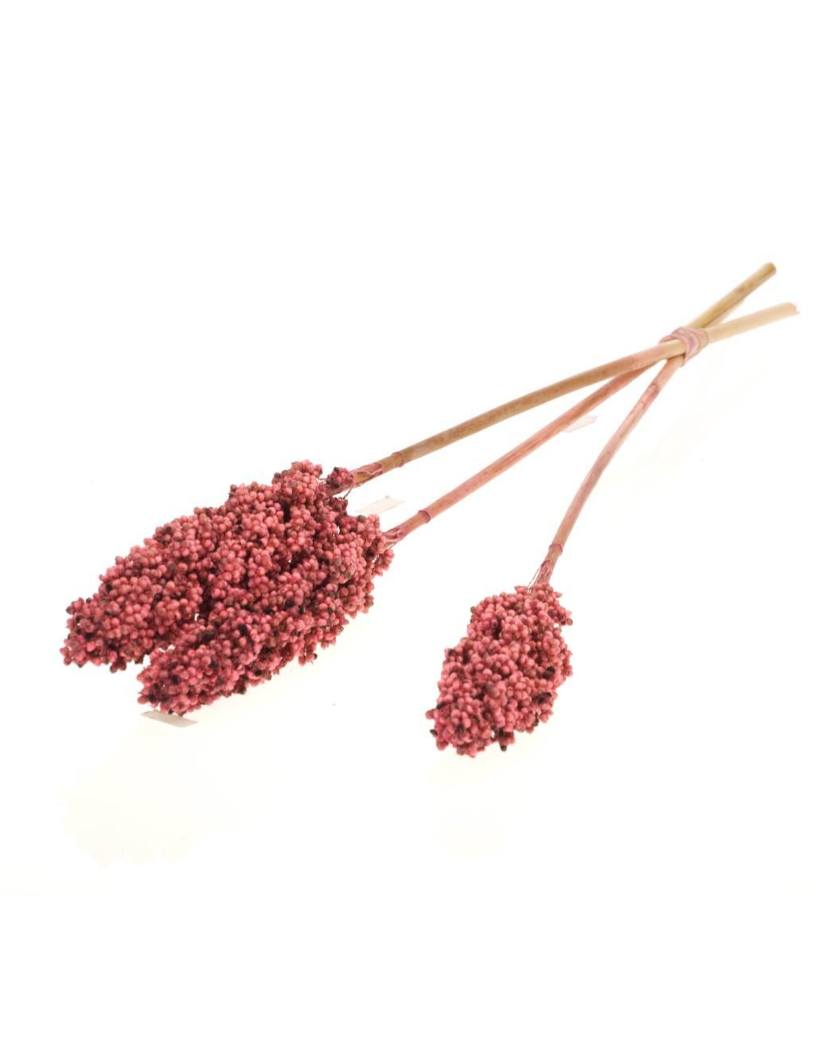 Indian corn 3pc bunch SB pink x 4