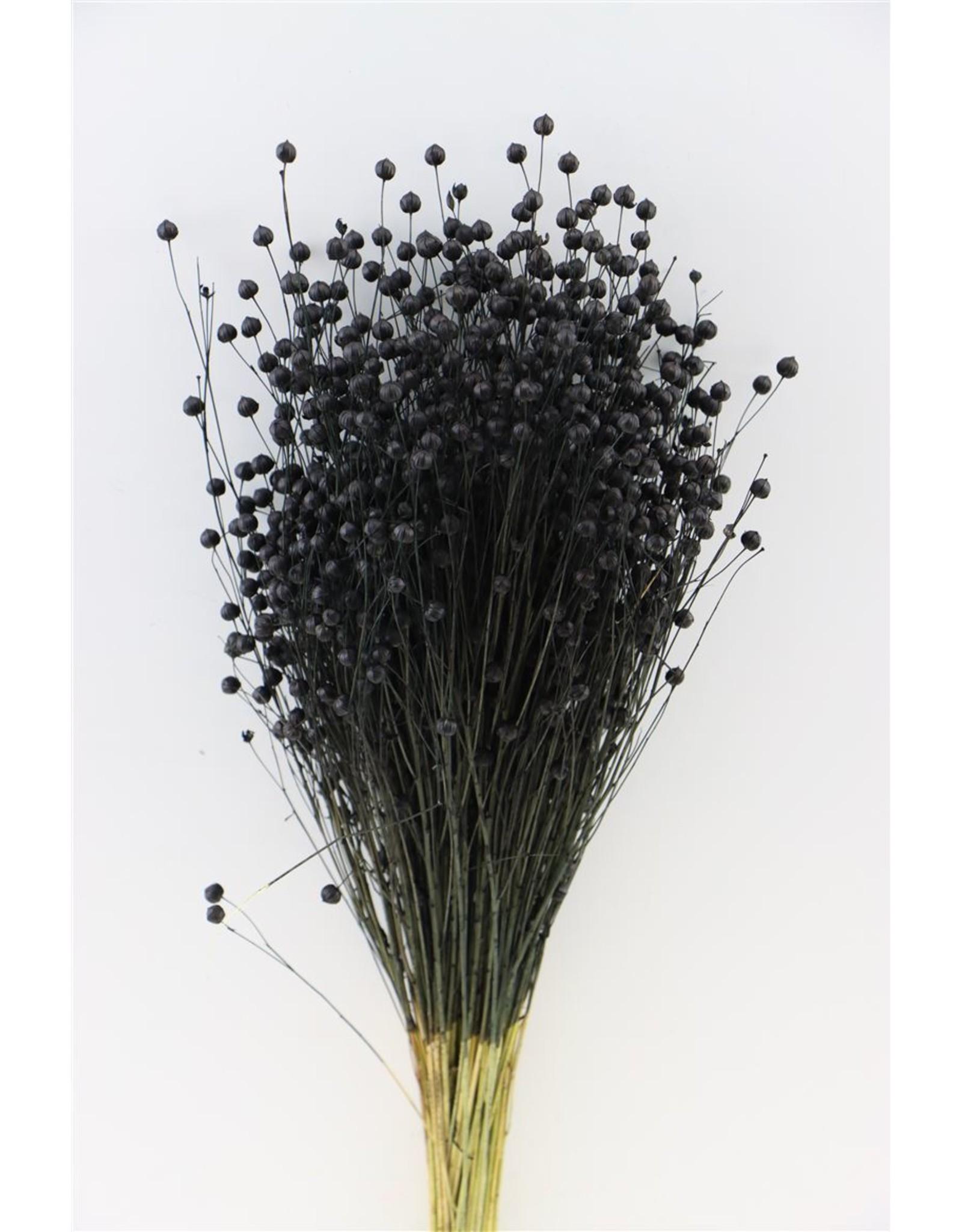 Dried Lino Vlas Zwart Bunch x 2