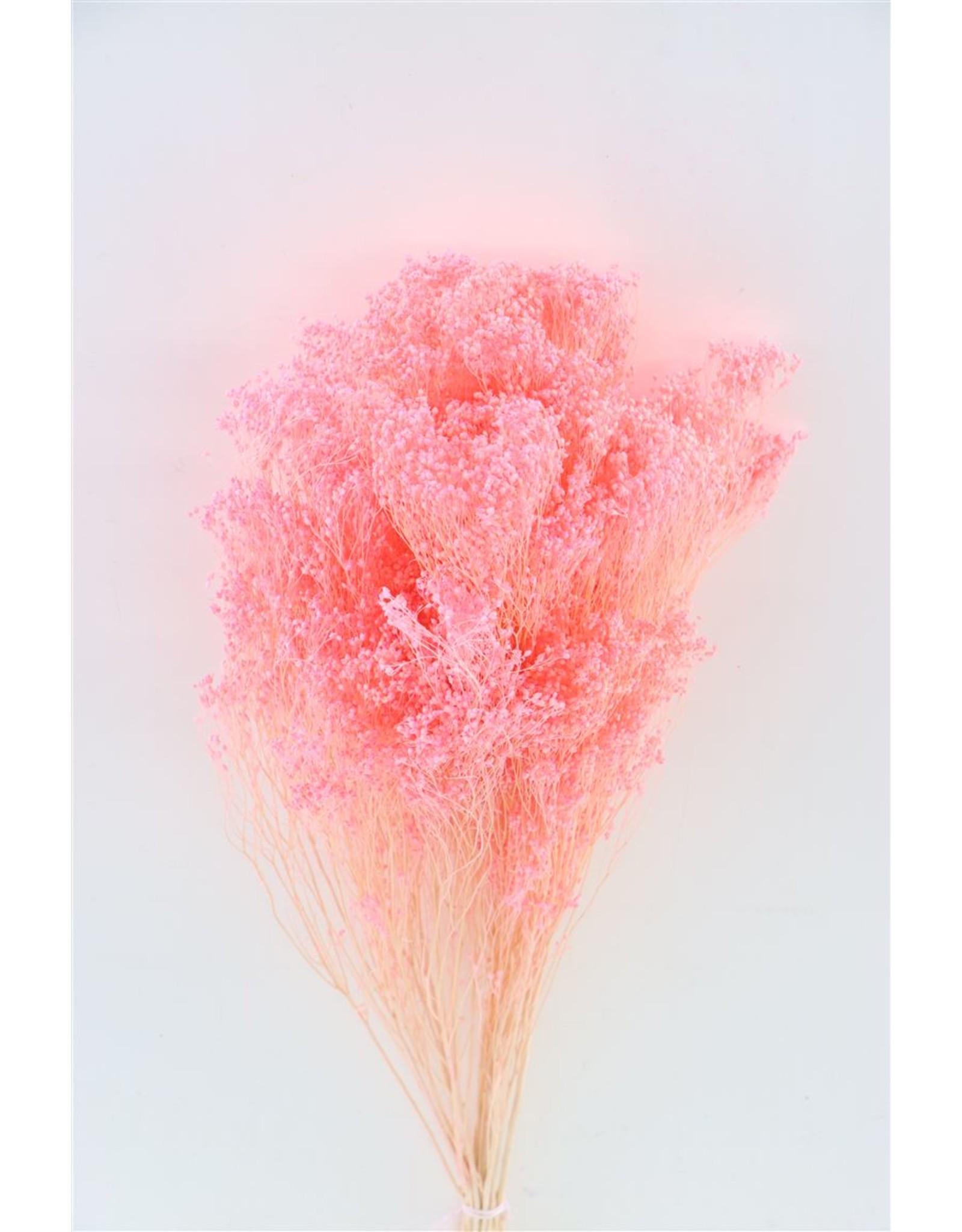 Dried Broom Bloom Light Pink 100gr Bunch x 2
