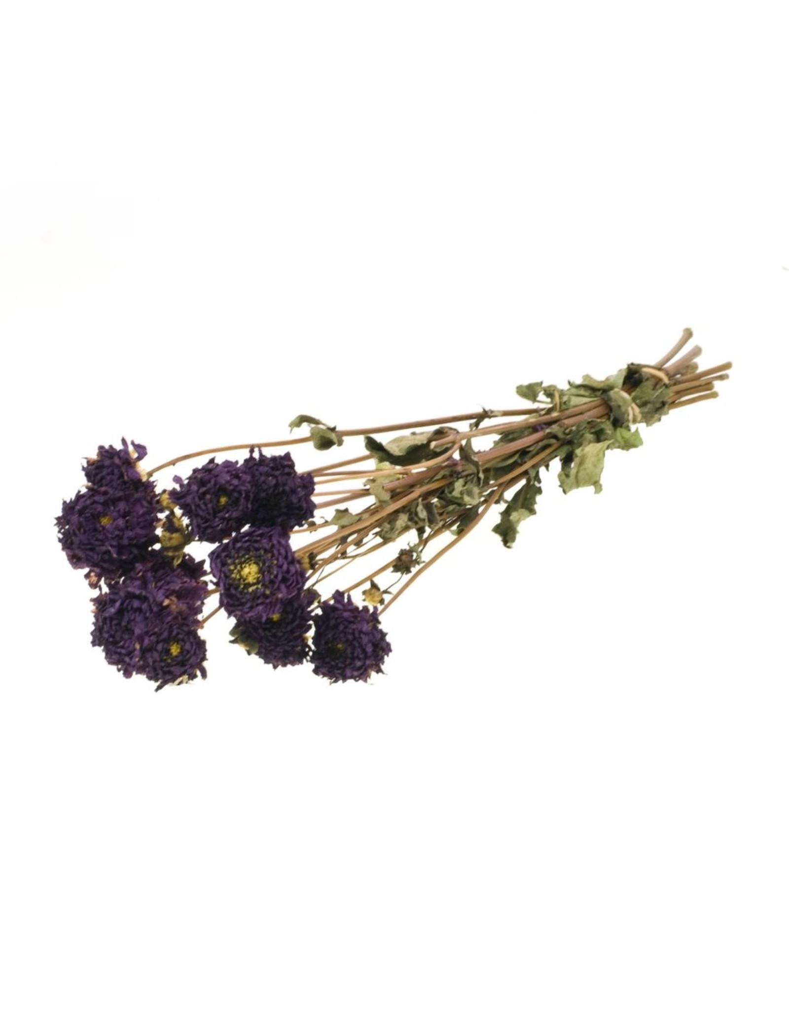 Dahlia natural lilac x 15