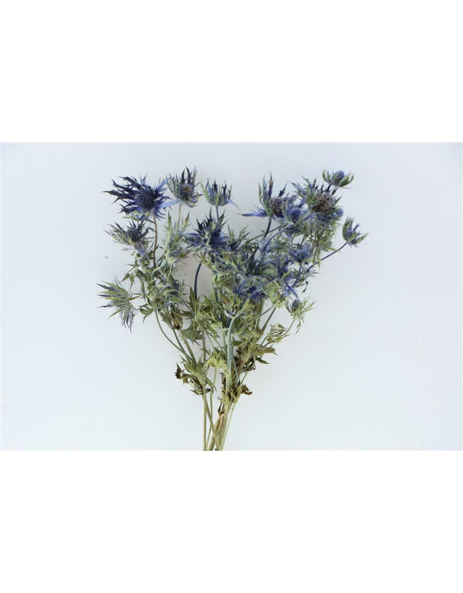 Dried Eryngium Blauw Bunch x 5