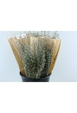 Dried Oregano Natural Bunch x 2