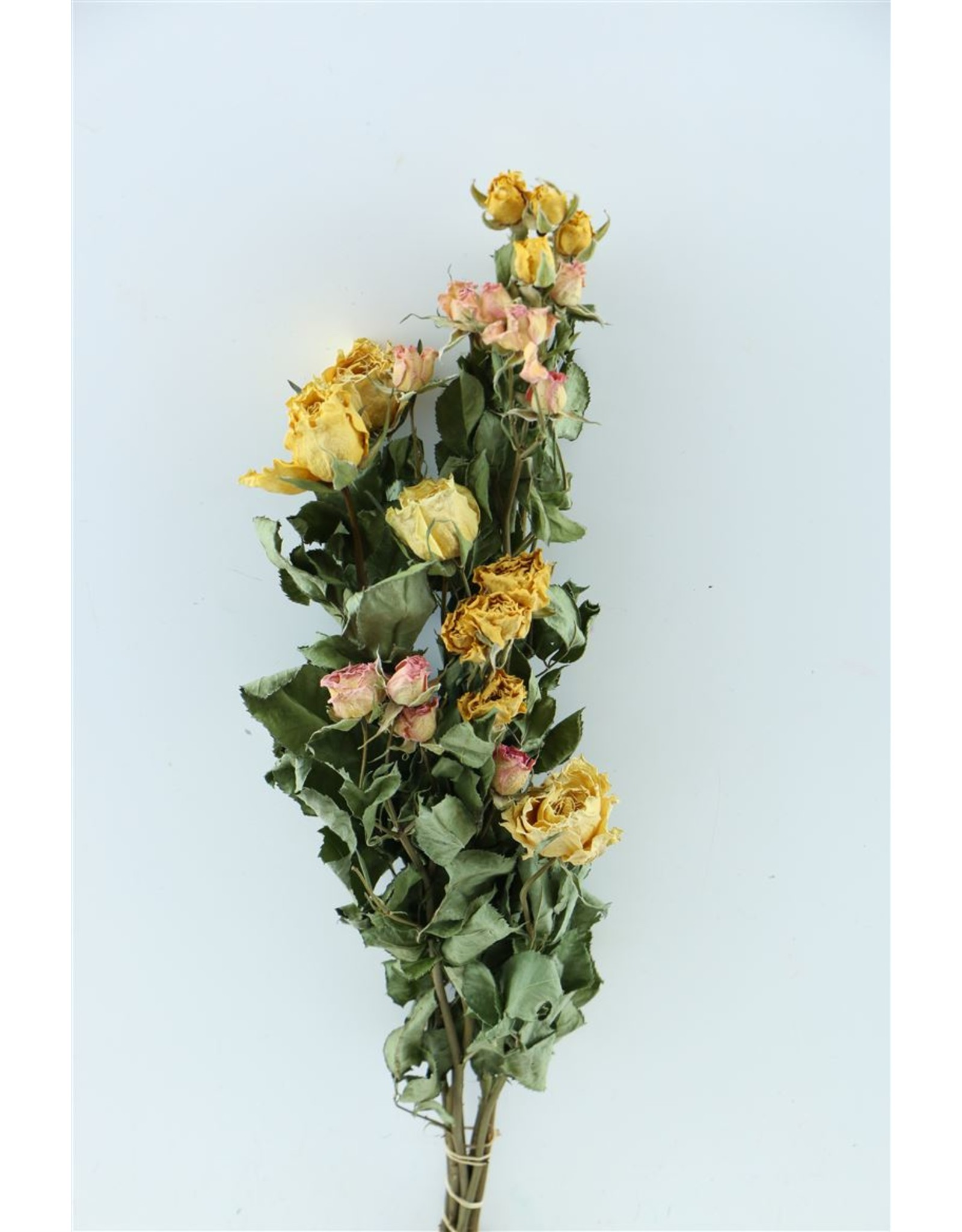 Dried Roses Bouquet Yellow/pink Bunch x 2