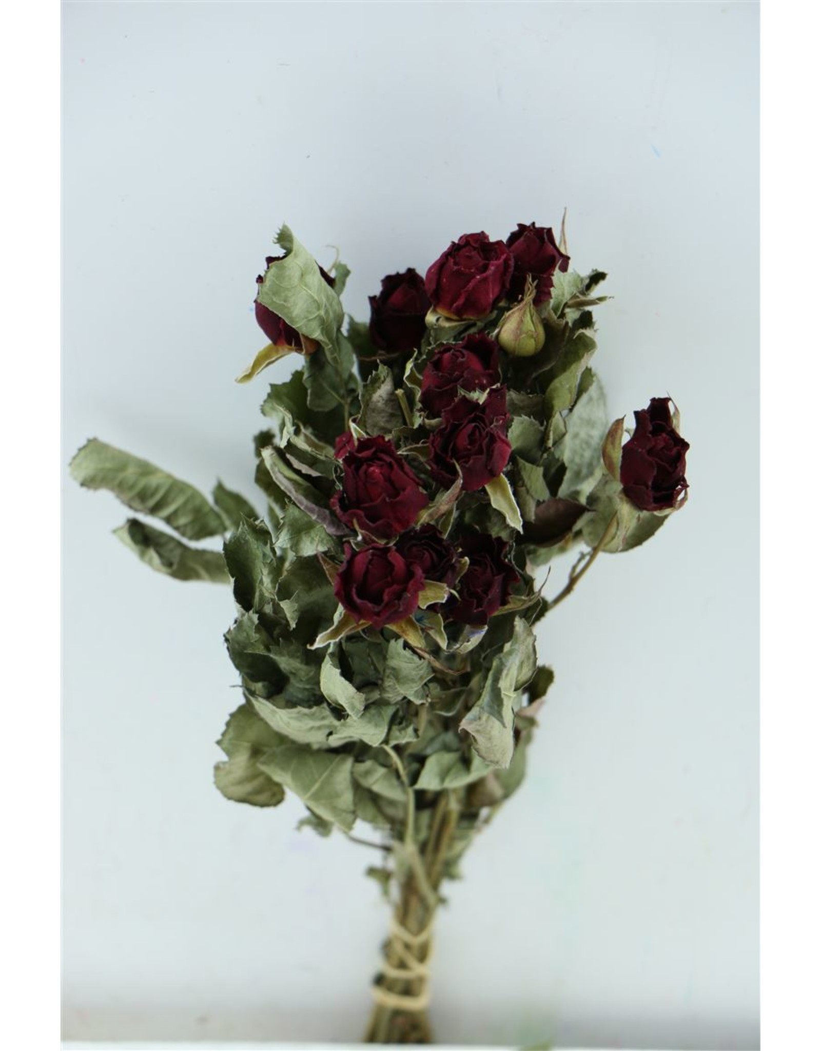 Dried Roses Burgundy 10pcs Scented Bunch x 8