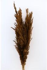 Dried Pampas Gras Naturel ( 8 Stem ) Bunch x 1