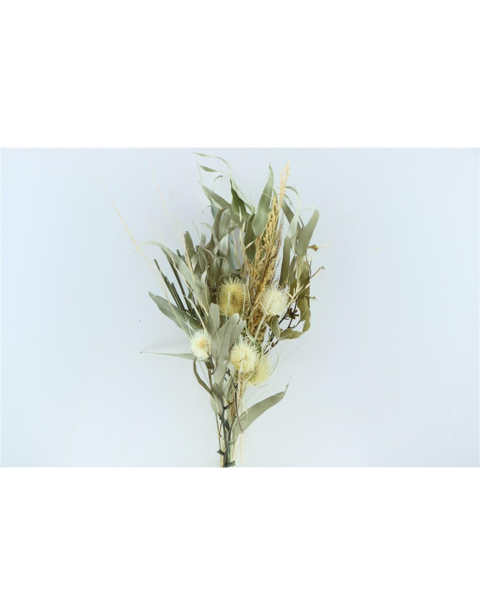 Dried Bouquet Saint Jean Cap Ferrat x 1