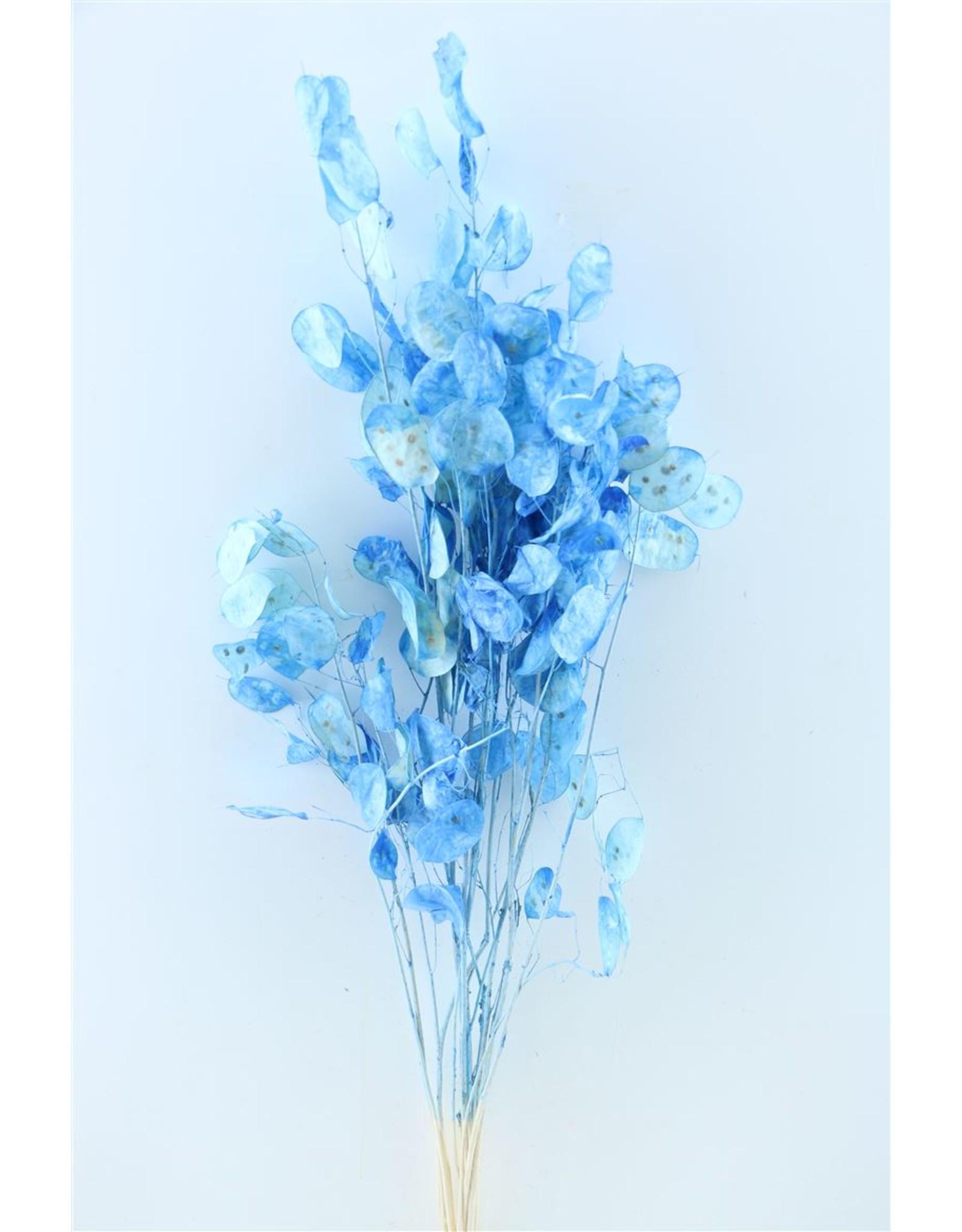 Dried Lunaria D.blue Bunch x 1
