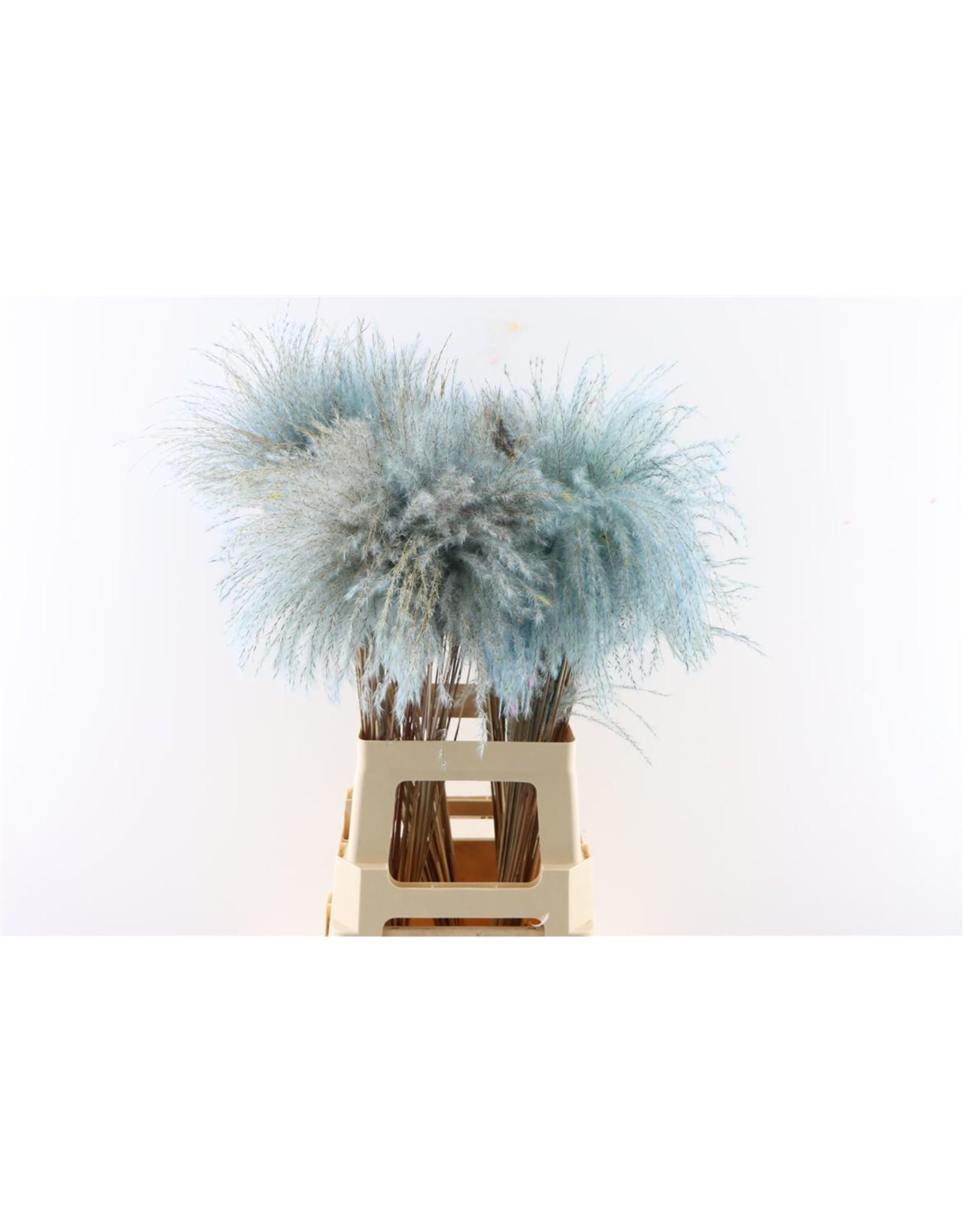 Dried Stipa Feather Licht Blauw P Stem x 50