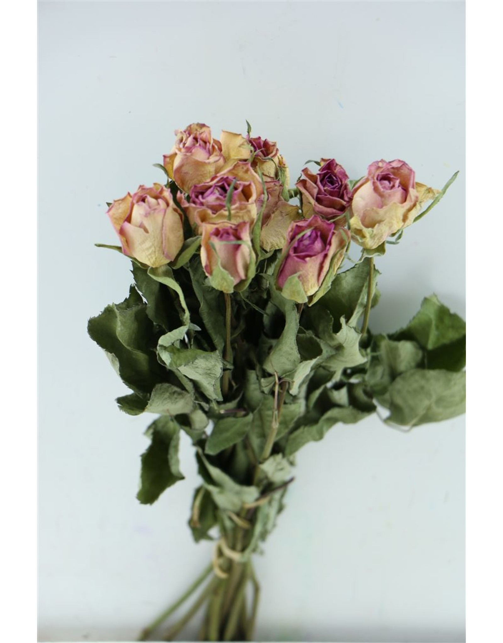 Dried Roses Milka 10pcs Scented Bunch x 8