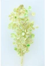 Dried Lunaria L.mint Green Bunch x 1