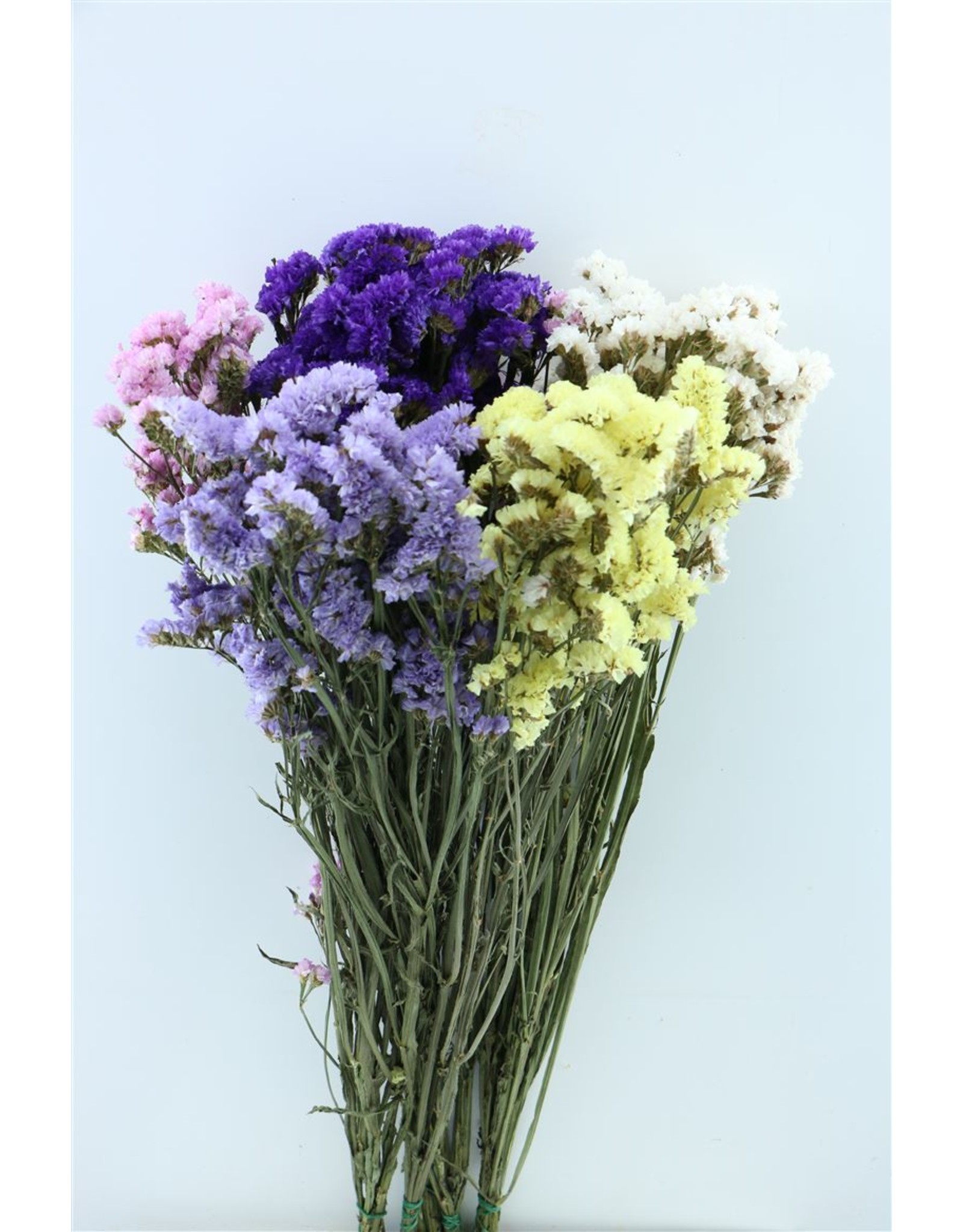 Dried Limonium Statice Assorted Bunch x 5