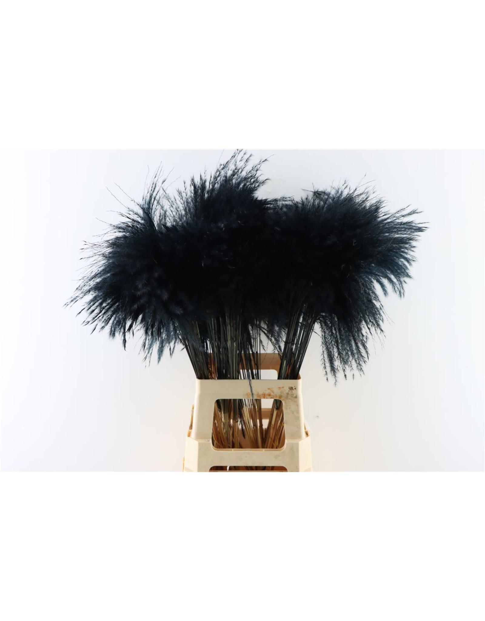 Dried Stipa Feather Black P Stem x 50