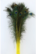 Dried Feather Peacock L90-100 Spec. Yellow x 50