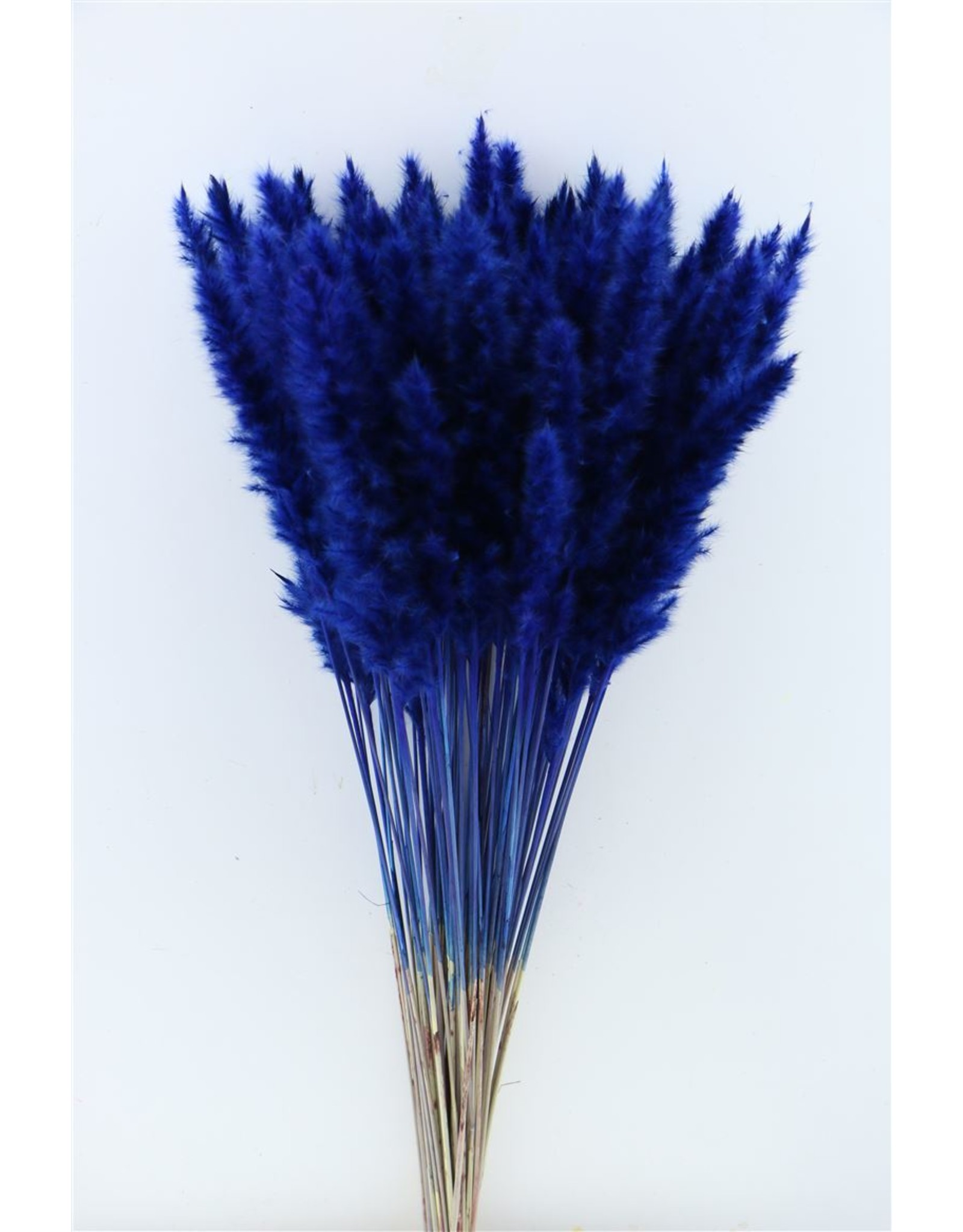 Dried Fluffy Pampas Blue Bunch x 3