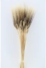 Dried Triticum Black Beard 250gr Bunch Poly x 2