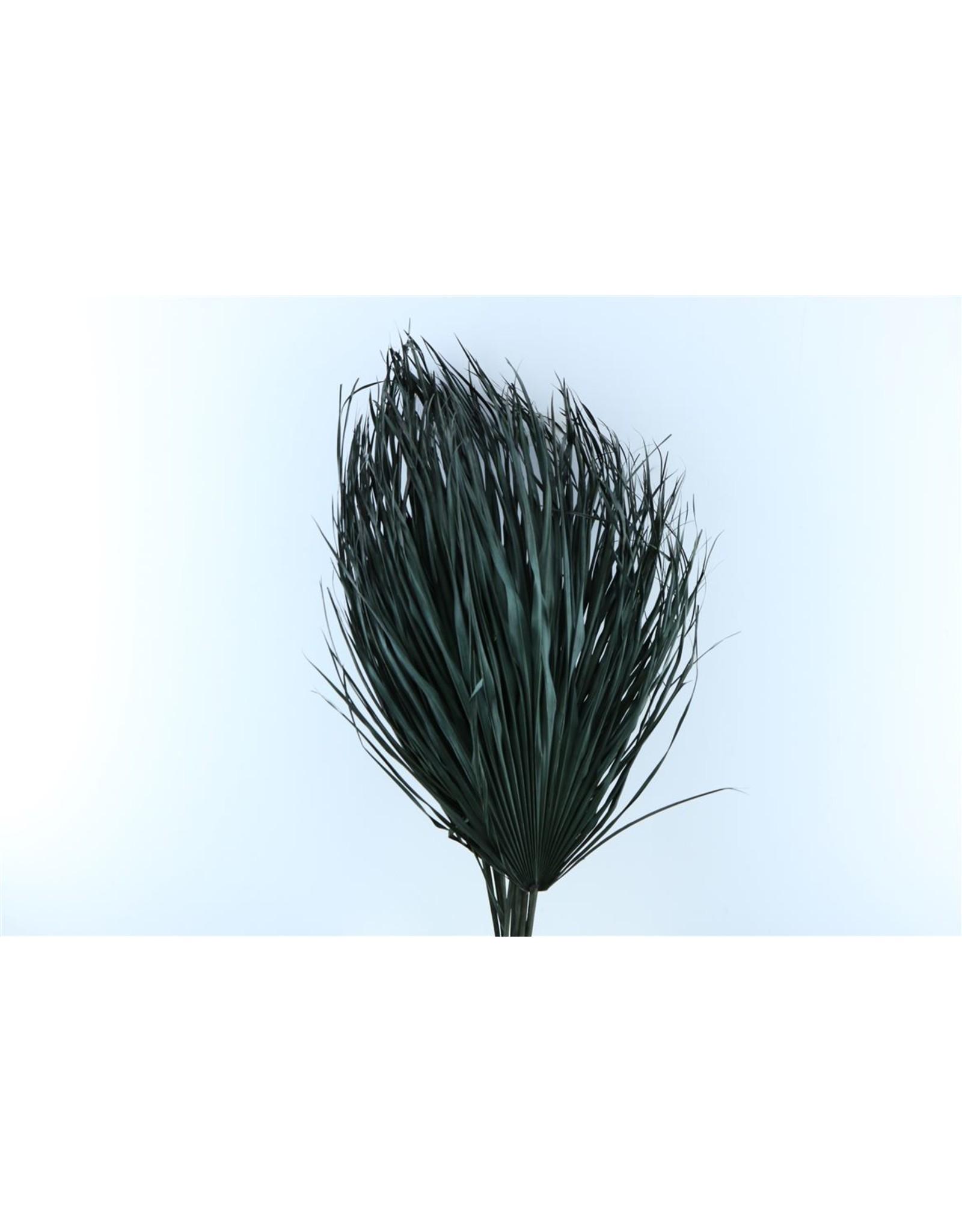 Dried Chamaerops (10tk) Black Bunch x 1