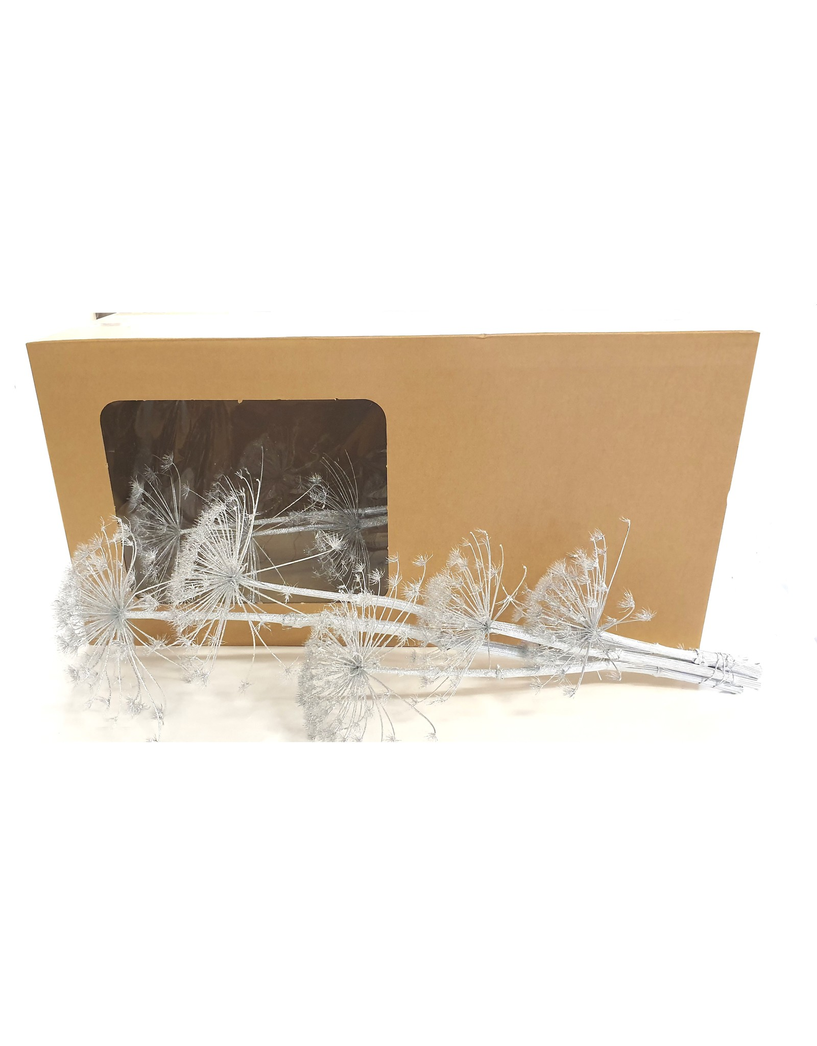 Heracleum heads 60-110cm 10pc in Vensterbox Silver + Glitter x 1