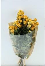Dried Roses Spray 40cm Yellow 10pcs x 2