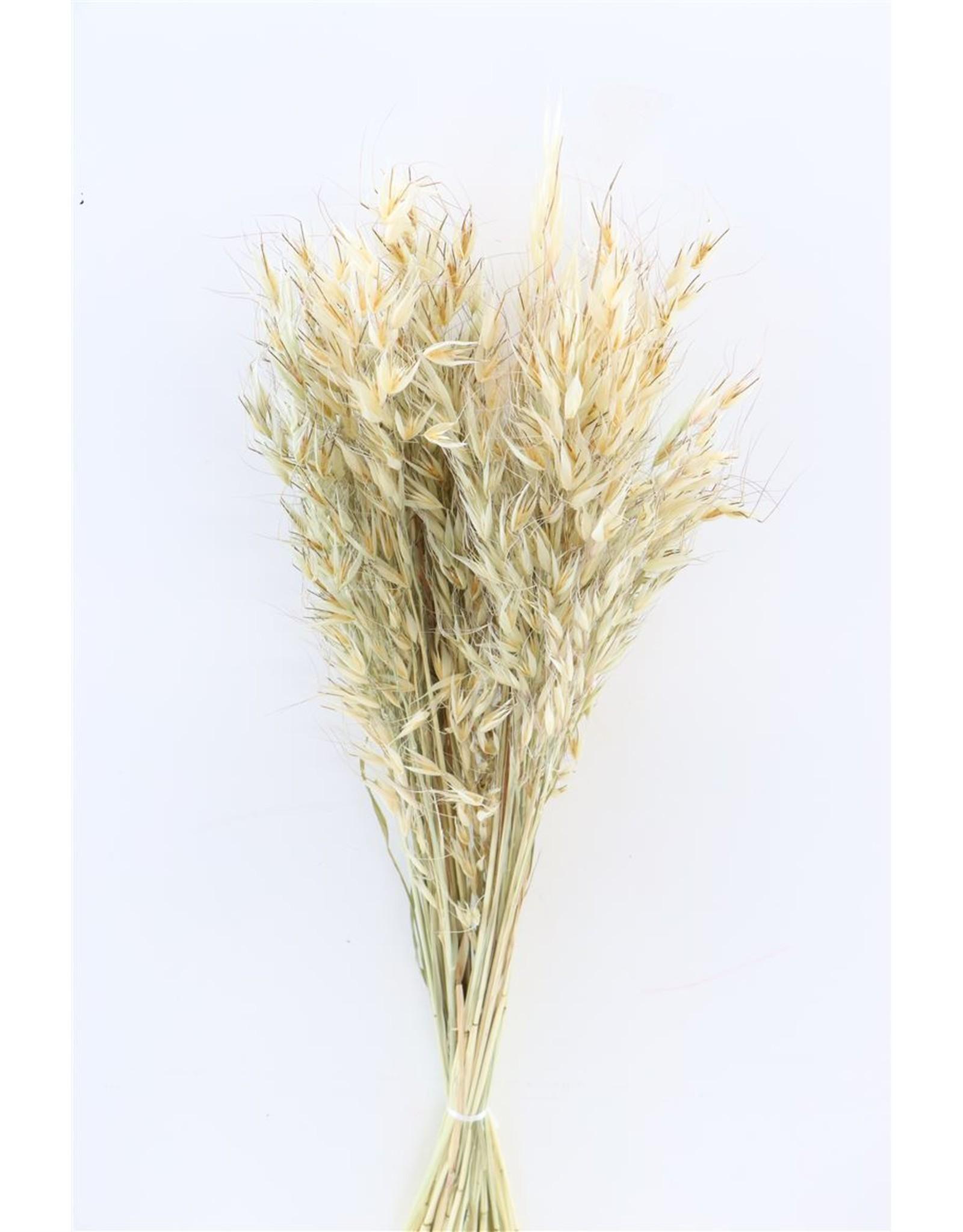 Dried Avena Wild Nat. 100gr Bunch Poly x 2
