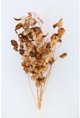 Dried Lunaria Brown Bunch x 1
