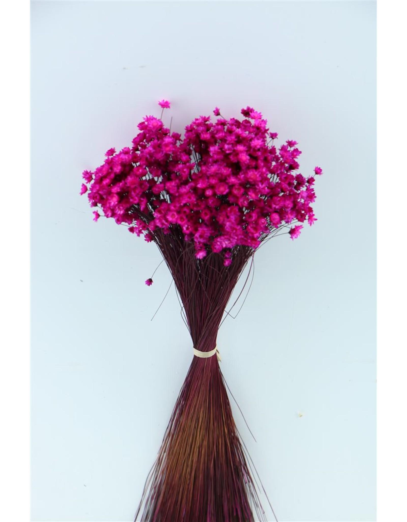 Dried Glixia 50gr Lilac Bunch x 1