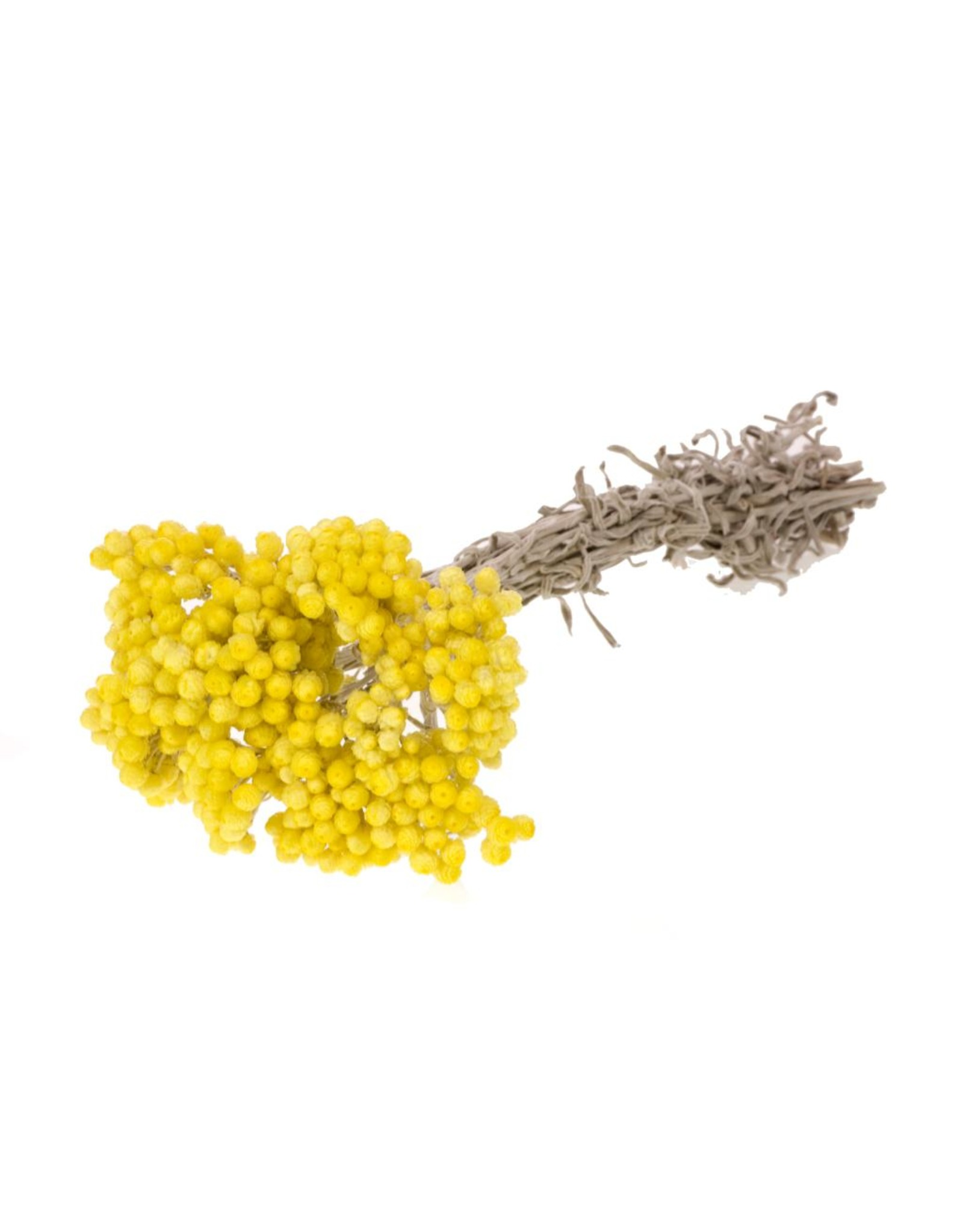 Immortelle natural yellow x 25