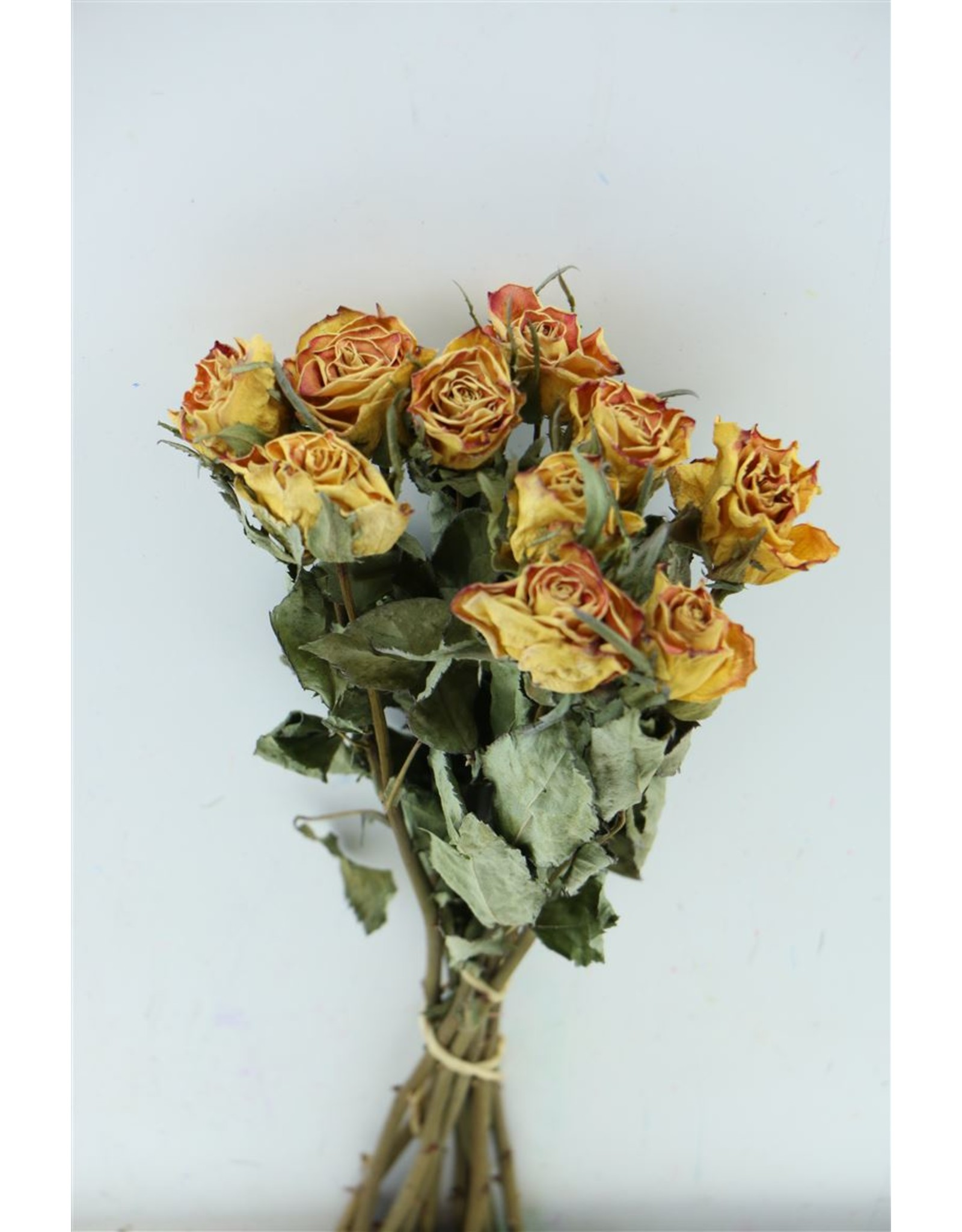Dried Roses Yellow-red 10pcs Scented x 8