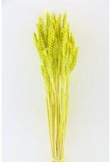 Dried Triticum Appelgreen 100gr Bunch x 2