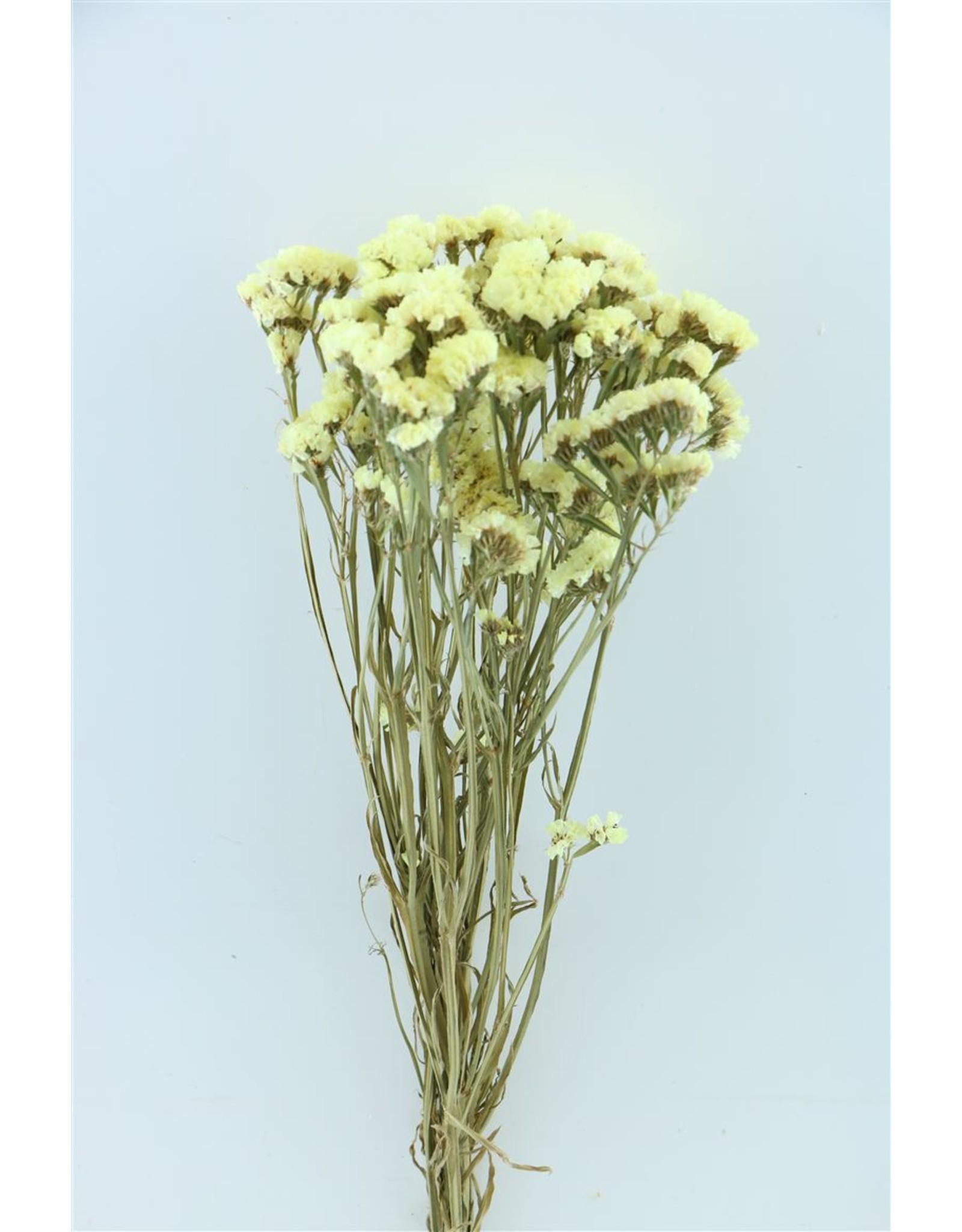Dried Limonium Statice Yellow Bunch x 5