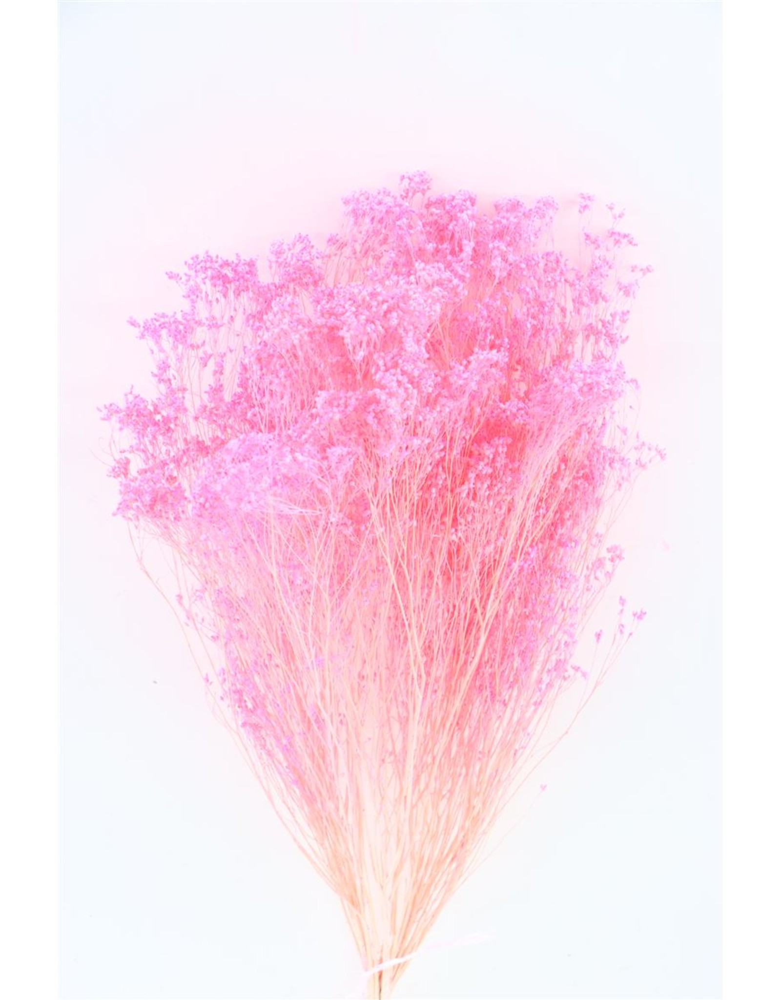 Dried Broom Bloom Pink 100gr Bunch x 2