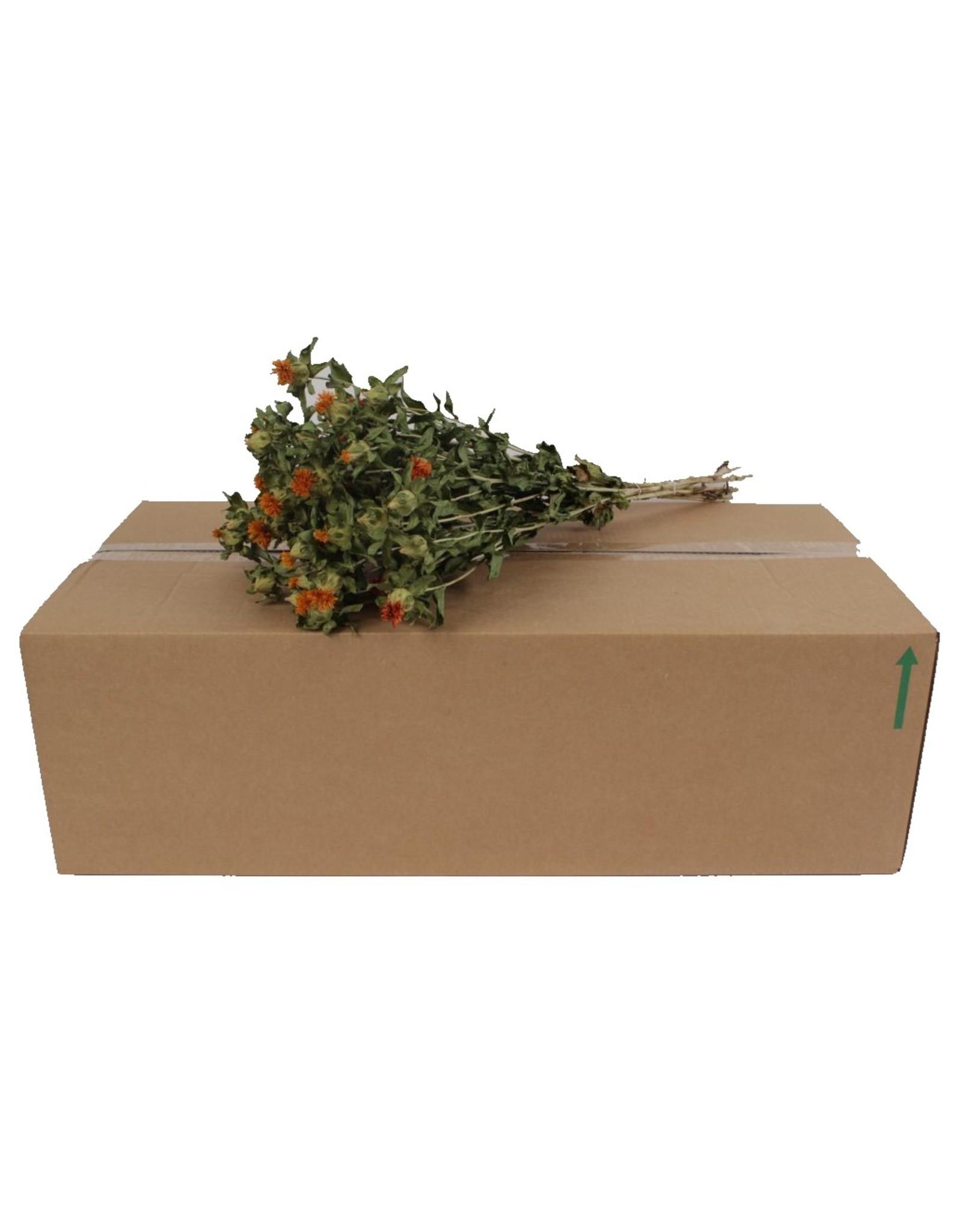 Carthamus Naturel Orange per bunch x 15