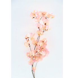 Dried Bougainvillea 45cm L. Pink Bunch x 5