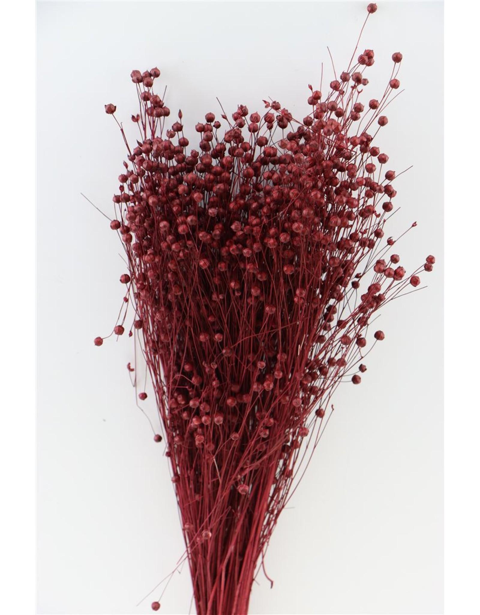 Dried Lino Vlas Bordeaux Bunch x 2