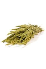 Amaranthus natural green x 20