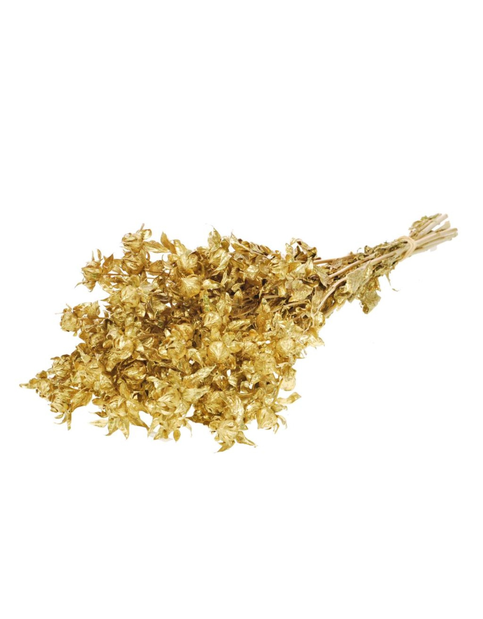 Bidens (carthamus) gold x 15